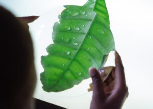 scientist looking at leaf through magnifying glass